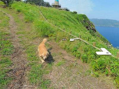 全世界最可愛!Google輸入鬱陵島..每個角落都有隻黃金導遊