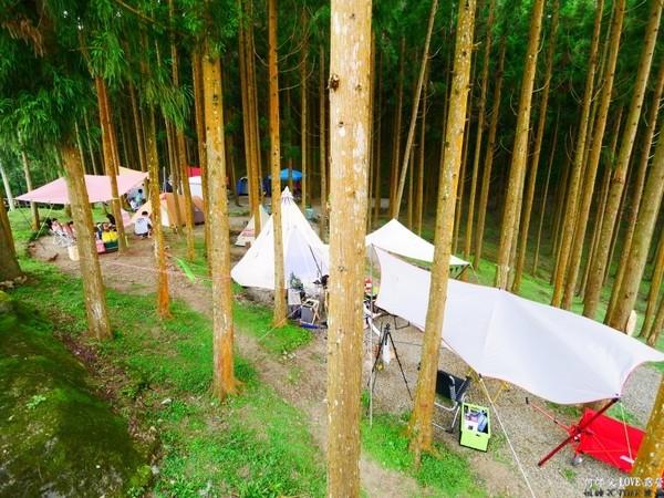 被一整片杉樹林包圍!新竹夢幻露營地 賞絕美夕陽大景