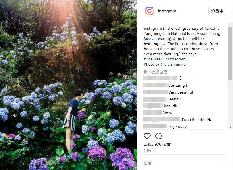 台灣女網友「香菇」一張在陽明山的繡球花照片,獲Instagram官方帳號選為PO文,短短3天超過145萬網友按「喜歡」。(圖/翻攝Instagram官方帳號)