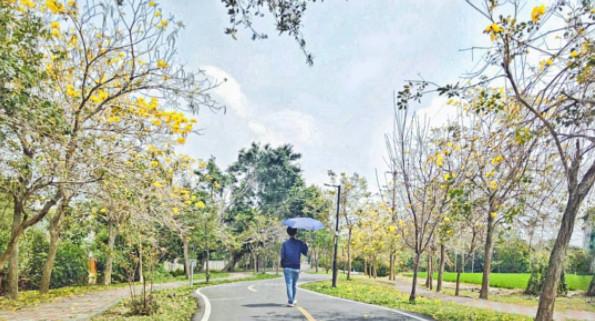 ▲台中潭雅神綠園道。(圖/IG@tayebohyun提供,請勿隨意翻拍,以免侵權。)