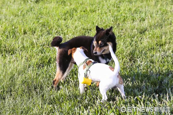 狗狗運動公園、寵物、毛小孩(圖/記者黃克翔攝)