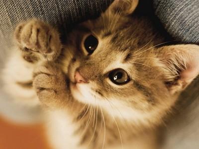 女友吵要養貓「半年後卻嫌煩」 網友勸:留牠放生她!