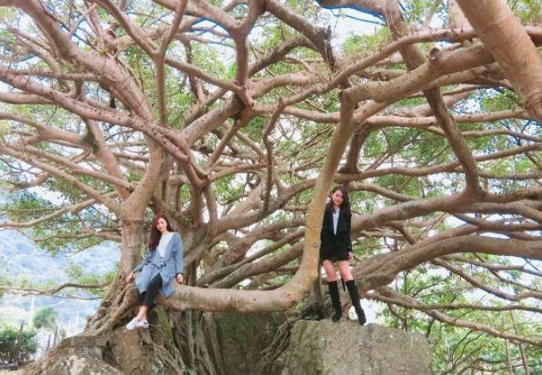 北關海潮公園的傘狀榕樹。(圖/IG@yunyun0813提供)