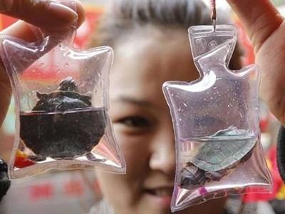 殘忍!中國景點賣「活的鑰匙圈」,動物被封進缺氧小包3天就死