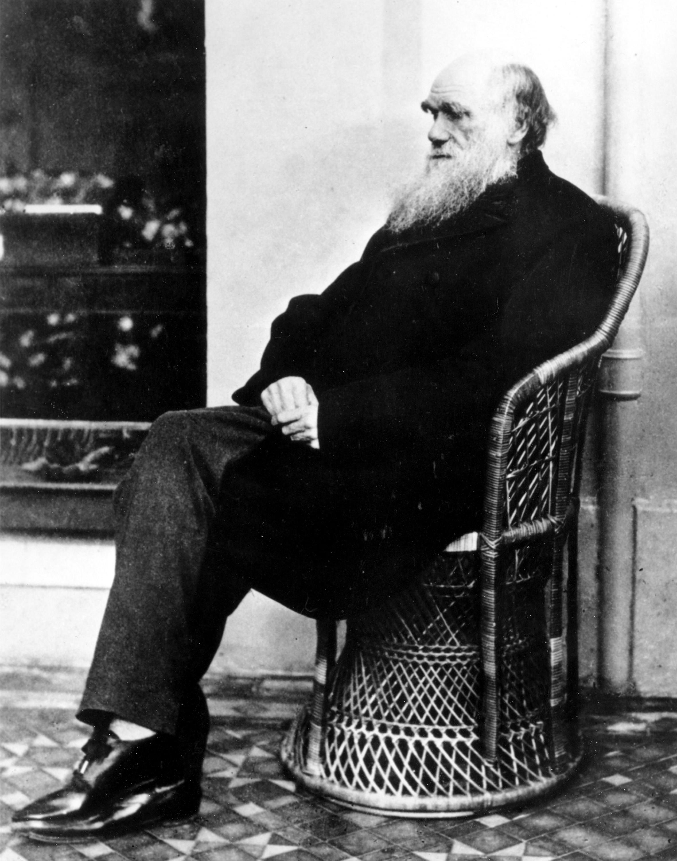 ▲▼英國生物學家達爾文(Charles Darwin),他所提出的「演化論」被喻為「19世紀三大發現之一」。(圖/達志影像/美聯社)