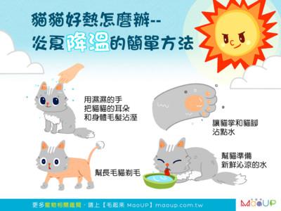 貓貓好熱怎麼辦? 炎夏降溫「4妙招」...快幫肉球沾點水