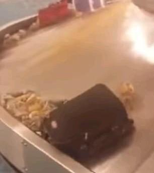 託運中滑出來!「海鮮橫行」機場行李轉盤 旅客嚇傻搶蟹放冰箱(翻攝自Ofori Anim臉書)