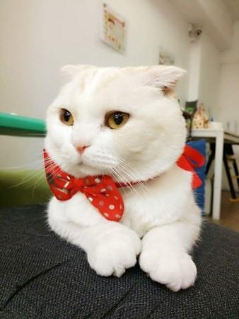 咕嚕咕嚕貓咖啡(圖/翻攝自咕嚕咕嚕貓咖啡粉絲團)