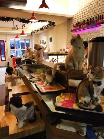 貓爸貓咪主題餐廳(圖/翻攝自貓爸貓咪主題餐廳粉絲團)