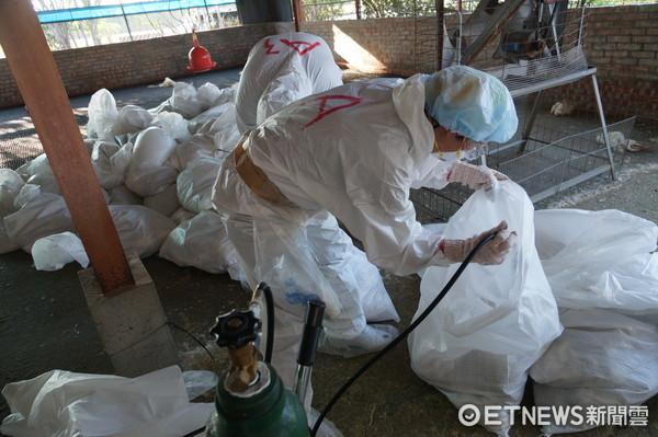 ▲台南市柳營區一養鵝場,確診感染H5N2亞型高病原性禽流感,動保處已執行撲殺處置2135隻鵝隻。(圖/記者林悅翻攝)