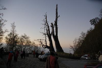 塔塔加夫妻樹。(圖/玉山國家公園提供)