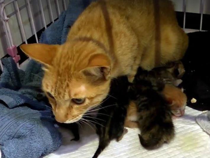 一出生就遭棄養!小奶貓渾身顫抖 貓媽擁入懷溫柔哺乳
