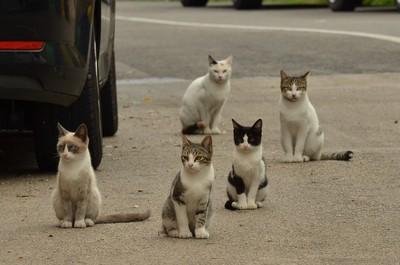 街貓總在半夜開「里民大會」? 不只是「聊天」而已!