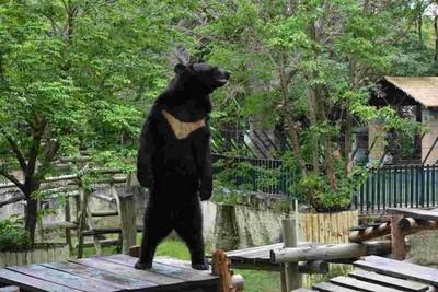 山稜線上逐漸消失的深白V輪廓:台灣黑熊