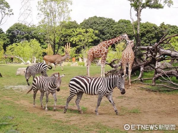 ▲▼橫濱市 橫濱動物園Zoorasia 。(圖/神奈川縣台灣觀光推廣辦公室提供)