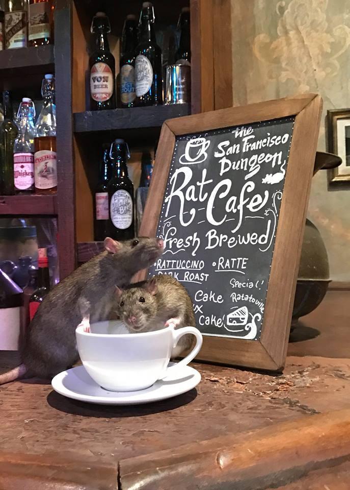 ▲▼舊金山「老鼠咖啡館」開幕。(圖/翻攝自The San Francisco Dungeon粉絲團)