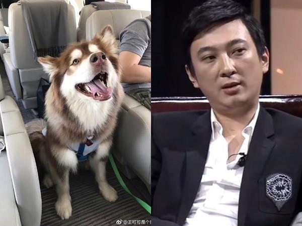 ▲▼王思聰帶愛犬搭飛機。(圖/翻攝「王可可是個碧池」微博、YouTube)