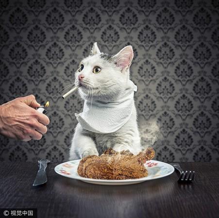▲▼貓,抽菸,二手菸,寵物,動物(圖/CFP)