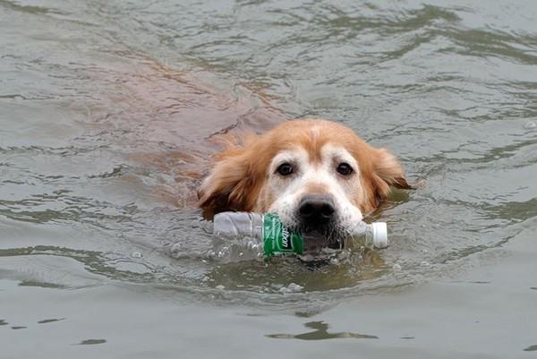 ▼「環保小尖汪」連水中的垃圾都不放過。(圖/翻攝自《新浪網》)