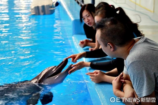 ▲▼香港海洋公園約會海豚。(圖/記者蔡玟君攝)