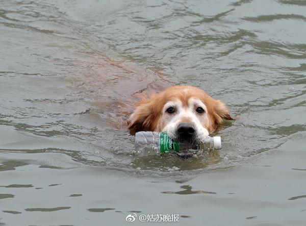 ▲▼蘇州「環保汪」愛下水撿瓶子。(圖/《姑蘇晚報》)