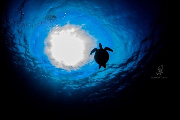 ▲▼小琉球海龜。(圖/facebook/島人。Islander)