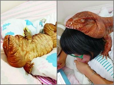 她在IG對「蜥蜴娃娃」又親又抱,近看後竟是活的