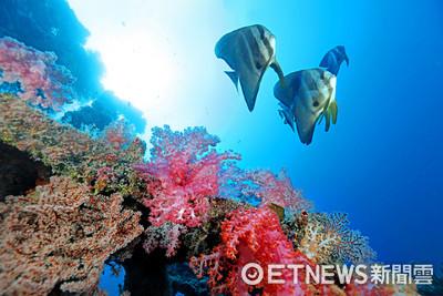 影/太平島海域發現5龍王鯛、41新物種