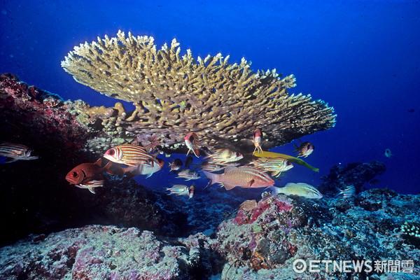 ▲▼總統府南海科技成就研討會,太平島水下照片             。(圖/中央研究院鄭明修博士提供)