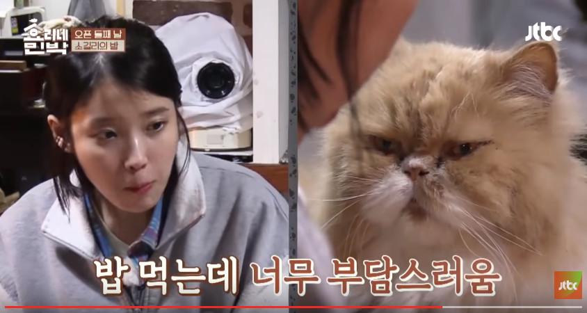IU跟厭世貓對看。(圖/翻攝自JTBC Youtube)