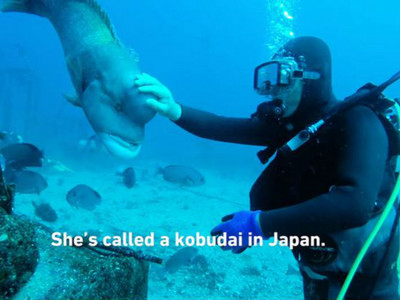 被魚記住的恩情!阿公級潛水夫救牠一命,30年來不曾忘