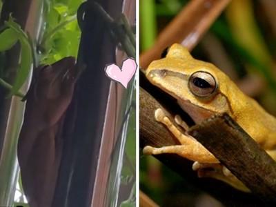 桃園巧遇超酷樹蛙&驚天大蝸牛!多久沒停下看看大自然了?