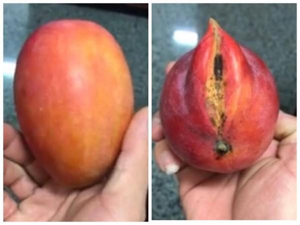 ▲這顆芒果,性別非常明顯。(圖/翻攝自爆廢3館影片)