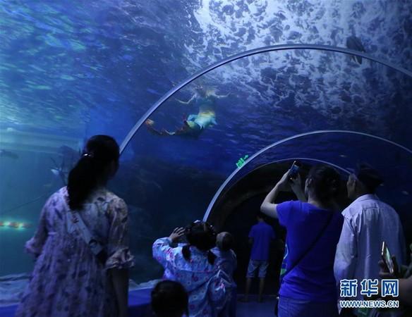 貴陽海洋世界「美人魚」。(圖/翻攝自新華網)