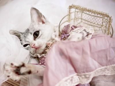 手縫貓咪洋裝!喵星人竟然乖乖穿上,好像中世紀的公主呀>///<