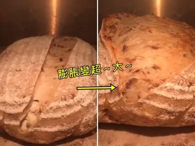 「麵包花」都開好了~縮時攝影看它快速膨脹,太療癒我看了十次