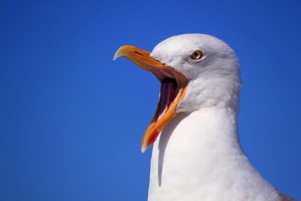 「抓到海鷗就養!」老爸拒養寵物出難題 卻低估女兒的行動力。(圖/取自免費圖庫cc0)