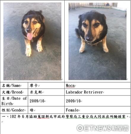 ▲新北市消防局開放6隻可愛的退役搜救犬供民眾認養。(圖/記者林煒傑翻攝)