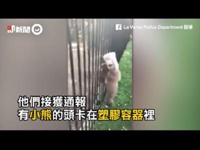 幼熊覓食結果頭被塑膠桶卡死 驚惶爬欄求助看了心好疼