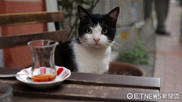 ▲▼《愛貓之城》劇照。(圖/絕色國際提供)