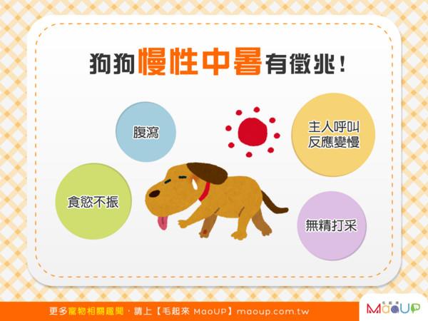 日頭赤炎炎!狗狗慢性中暑的4大徵兆!(圖/毛起來 MaoUp)