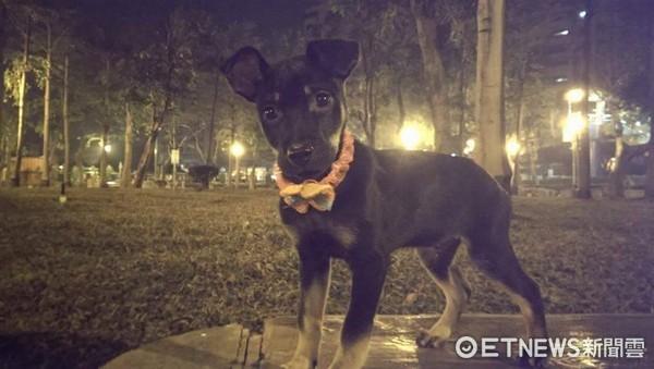 ▲愛犬走丟找不回...他路口驚見「笨狗闖紅燈」 一喊竟衝來狂舔。(圖/網友徐忠多提供,下同)