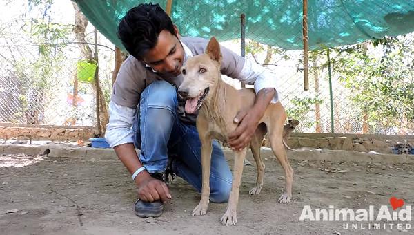 ▲靈魂破碎...石化狗被撫摸哀傷痛哭 救援後變美也愛笑了。(圖/翻攝自Animal Aid Unlimited, India Youtube)