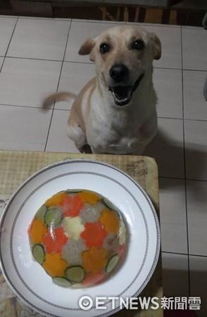 ▲奴才手作果凍蛋糕,慶祝10歲毛孩生日快樂。(圖/網友孫小妙提供,請勿隨意翻拍,以免侵權。)