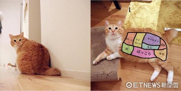 天生無辜臉!橘胖貓「Guppy」。(圖/Instagram/gupitaro提供。)