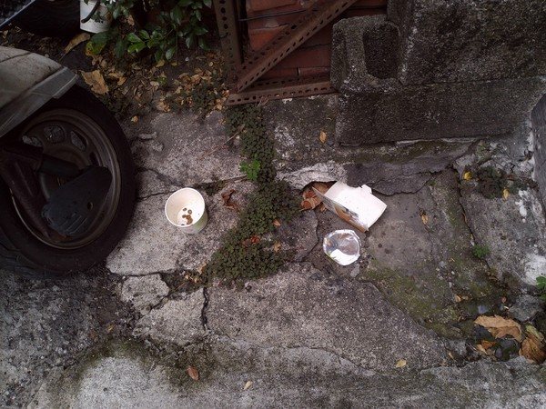 ▲▼愛貓人士放飼料後不理,紙碗內爬滿蟑螂。(圖/翻攝爆料公社)