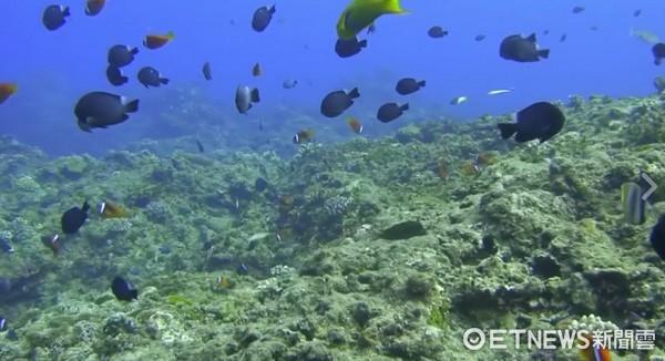 ▲▼蘭嶼椰油港海中世界。(圖/臉書專頁NG旅行授權提供,請勿翻攝)