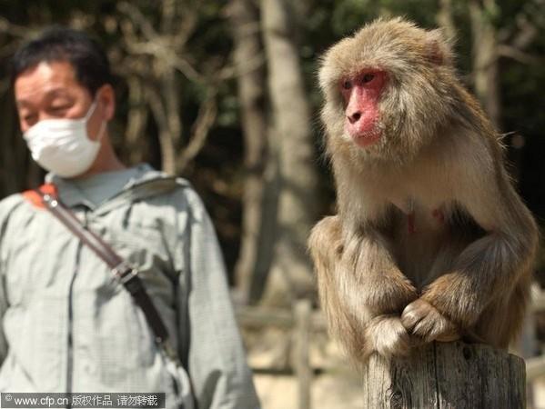 日本獼猴。(圖/CFP)