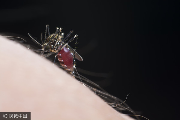 ▲▼蚊子、蚊子示意圖、叮咬。(圖/CFP)