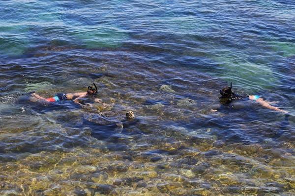 琉球很容易發現海龜的蹤跡。